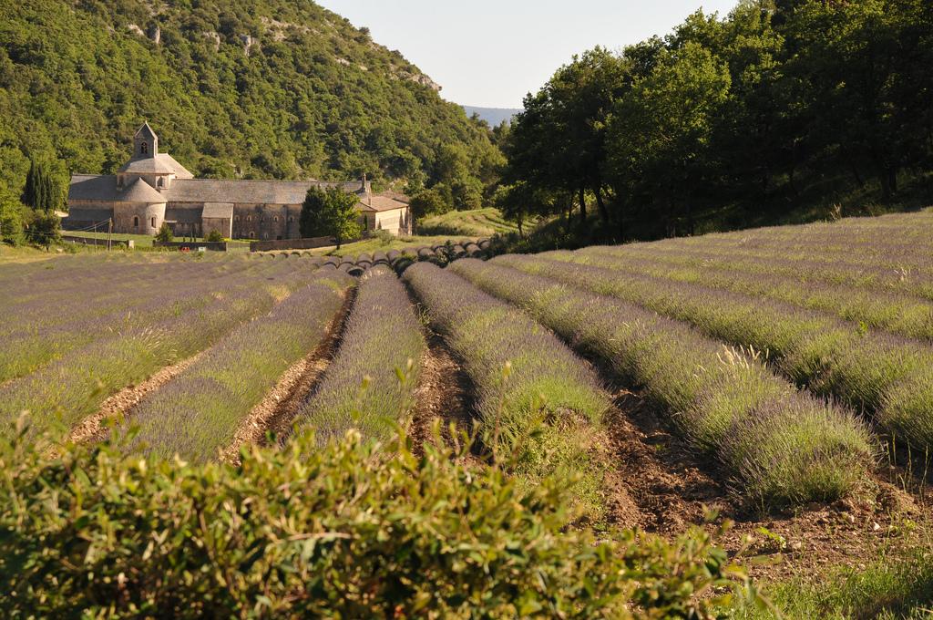 Абатство Сенок, Прованс