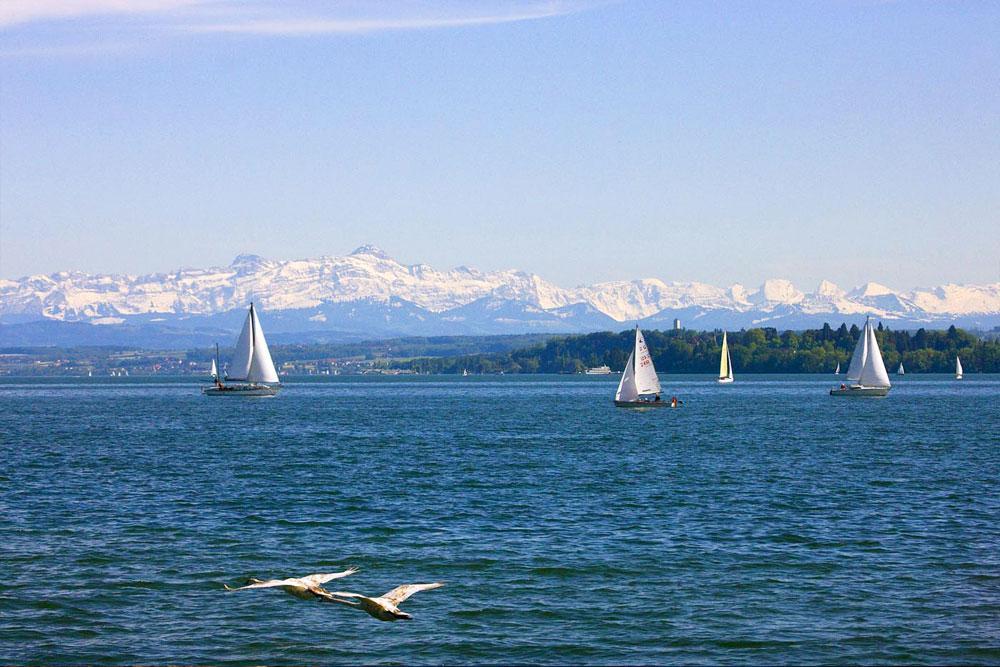Segelboote-auf-dem-Bodensee_front_large