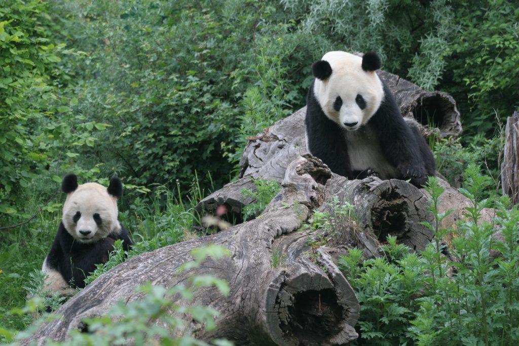 Зоопаркът във Виена – най-старият в света - 6