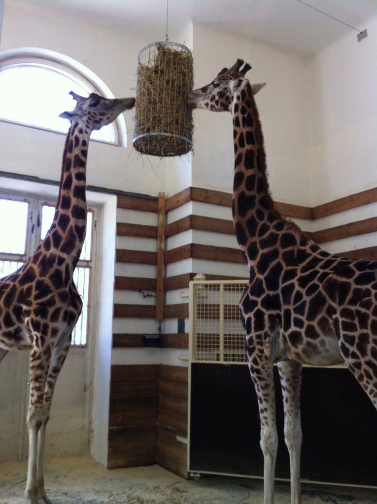 Зоопаркът във Виена – най-старият в света - 4