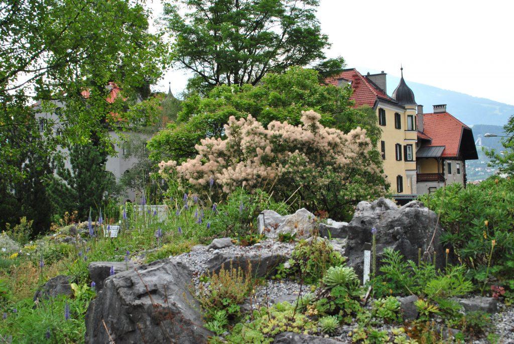 alpinum-garden