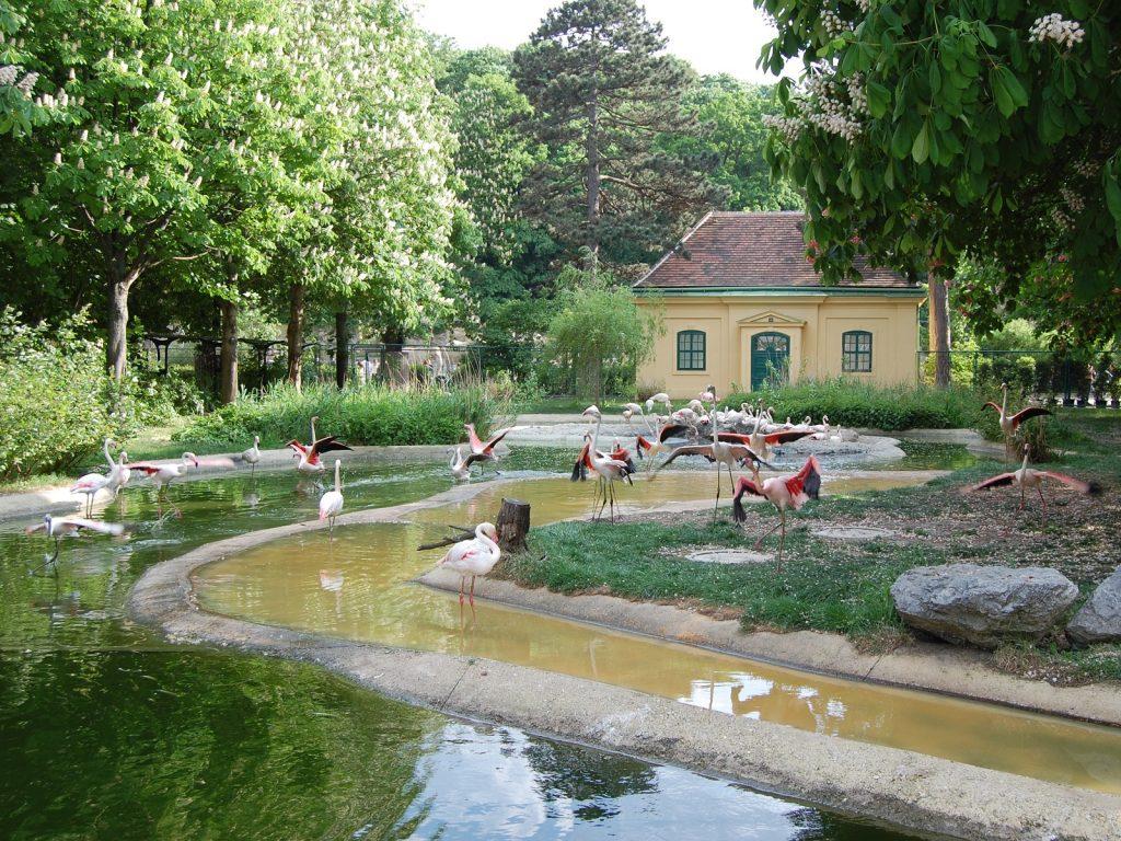 Зоопаркът във Виена – най-старият в света - 8