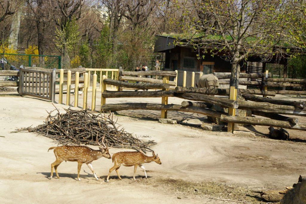 Зоопаркът във Виена – най-старият в света 5а