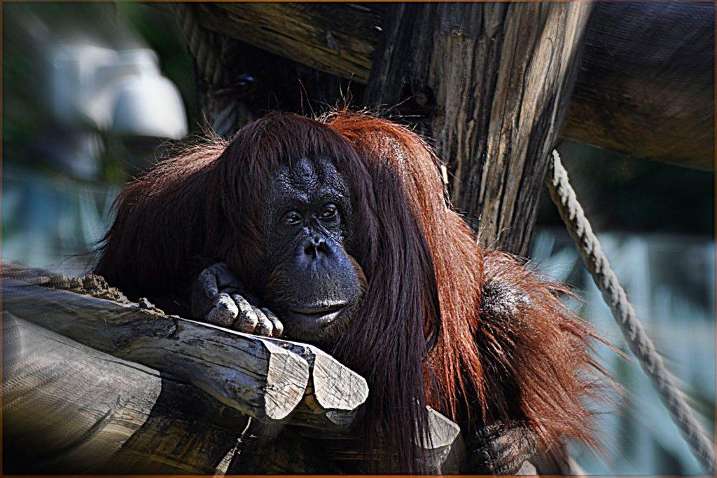 Зоопаркът във Виена – най-старият в света - 7