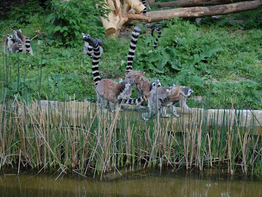 Зоопаркът във Виена – най-старият в света - 5
