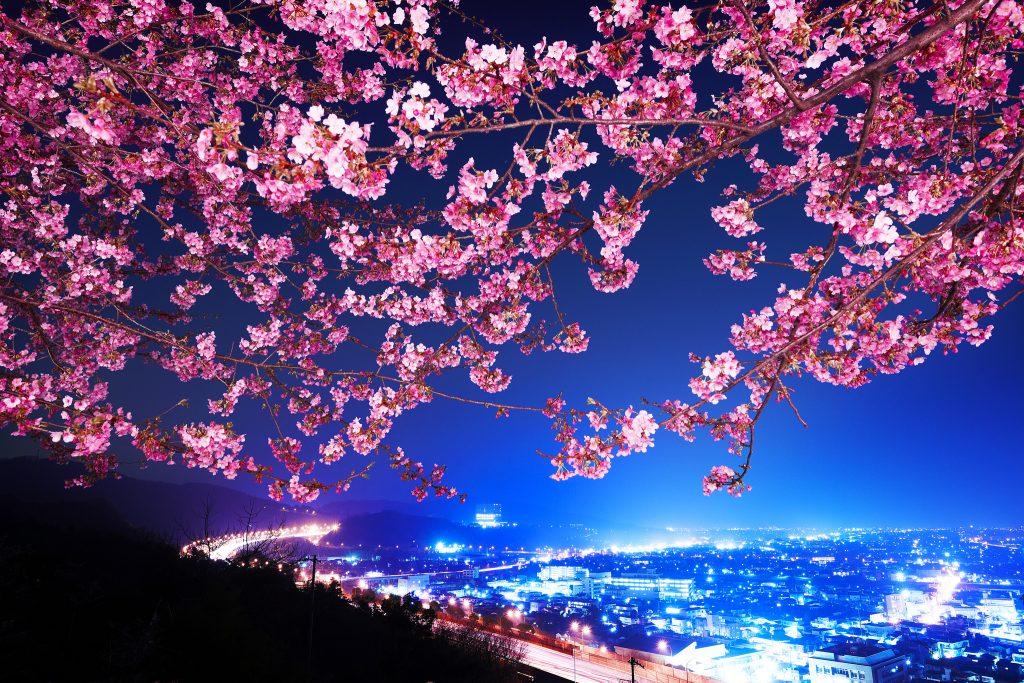 Сакура - вълшебният природен феномен в Япония 2