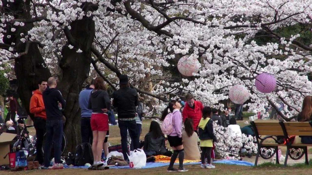 Сакура - вълшебният природен феномен в Япония 6