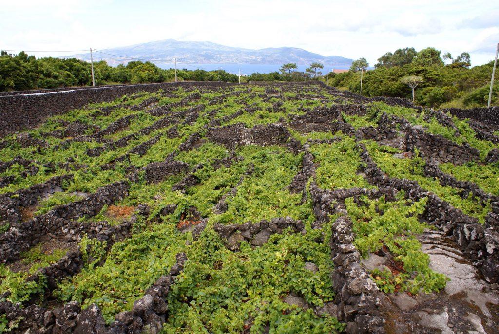 Райските Азорски острови – истинска кулинарна магия 13