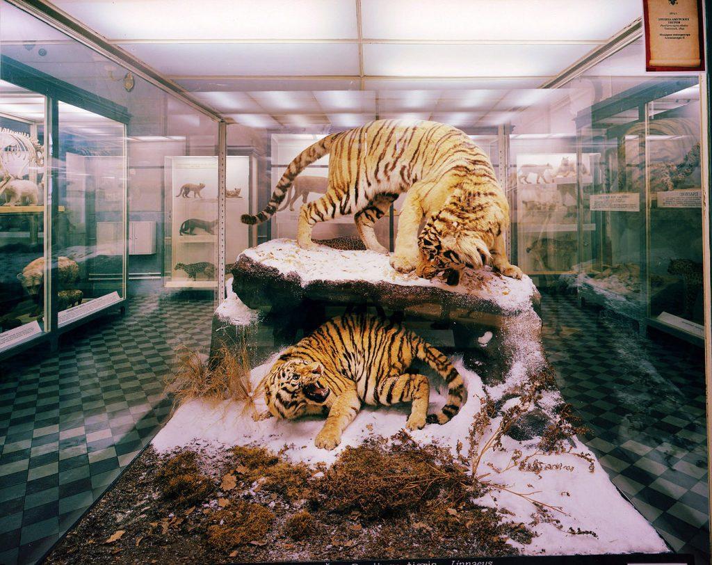 Exhibition_022_1080 cats