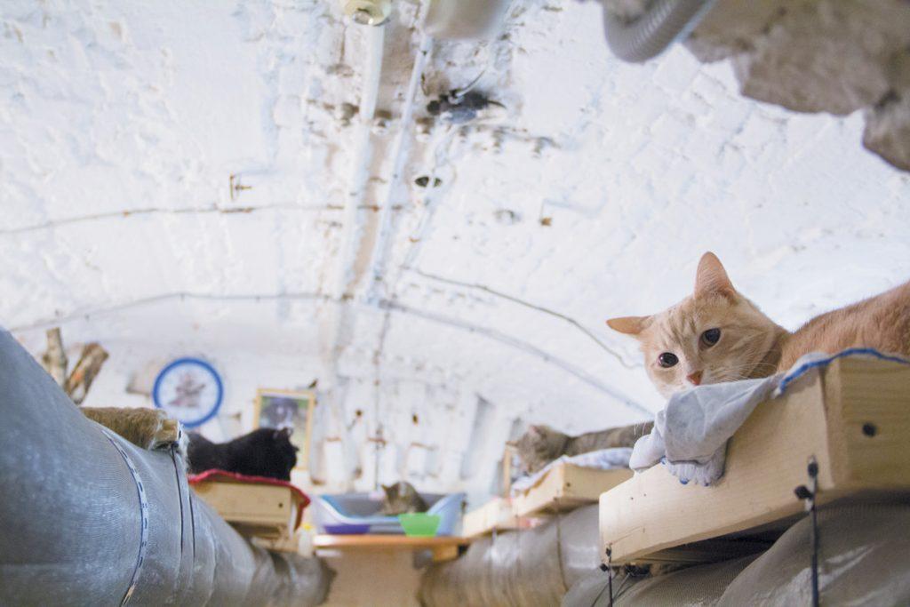 Подземията на Ермитажа – царството на котките - 5