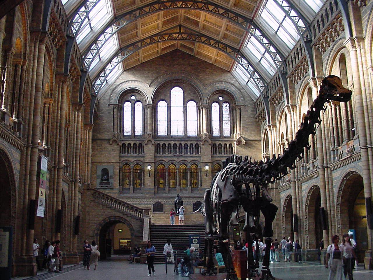 dinasaur - natural history museum