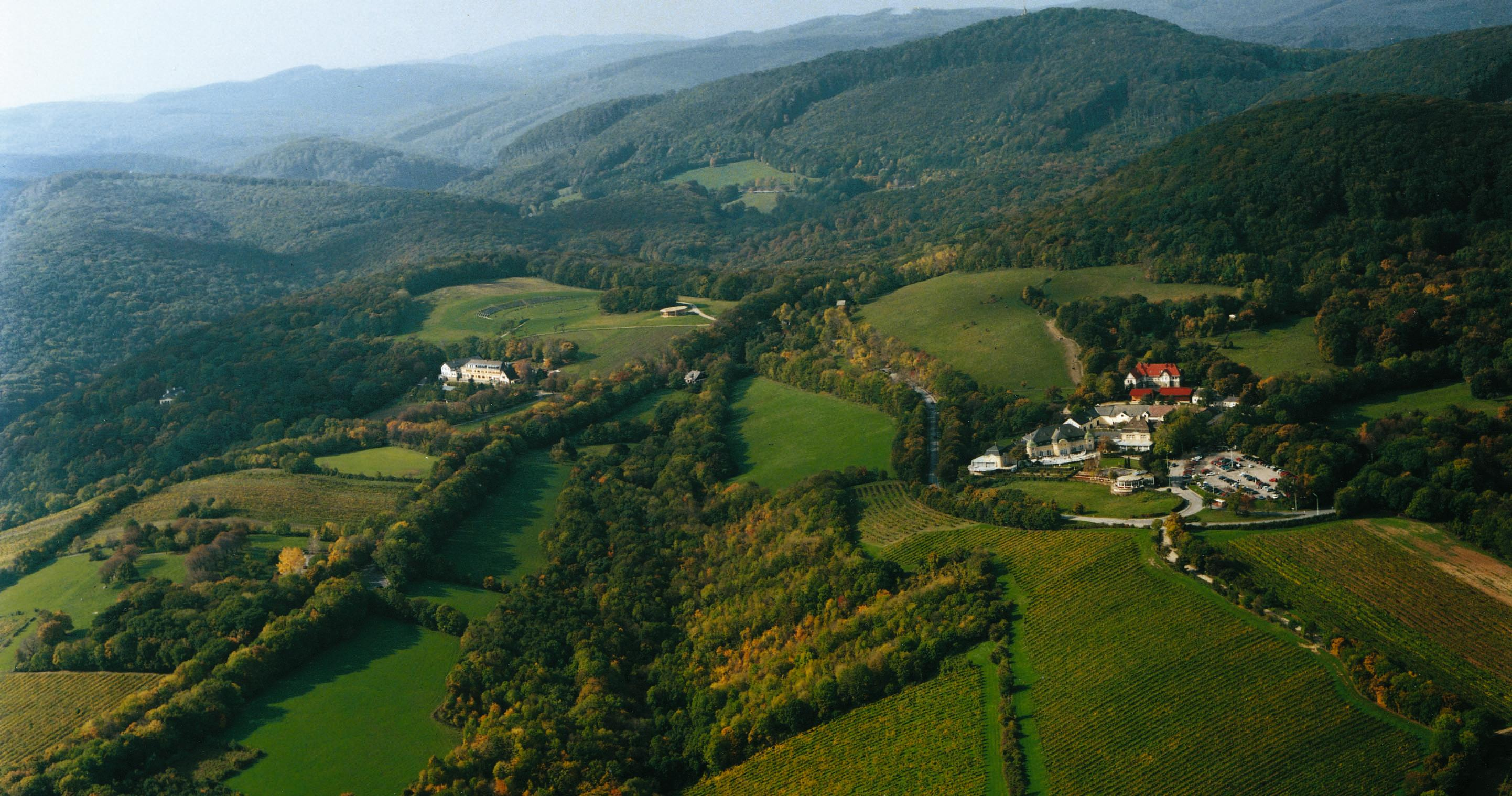 Виенската гора