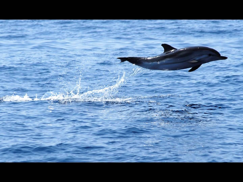 Портофино - пристанището на делфините - 2