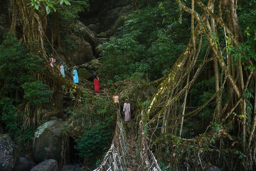 Възрастта на някои живи мостове е 500 години
