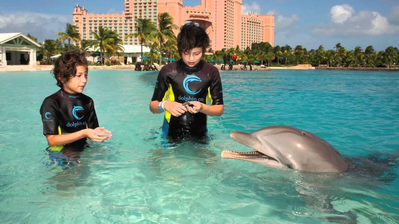Долфин бей
