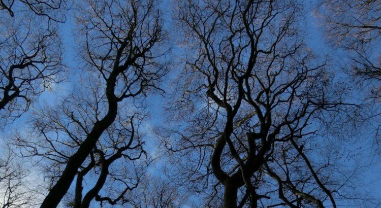 Ту Би Шват – Празникът на дърветата