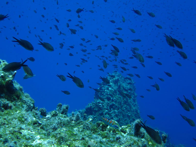 Тюркоазеният остров Санторини – 10 причини да го посетите - 9 - Руал Травел
