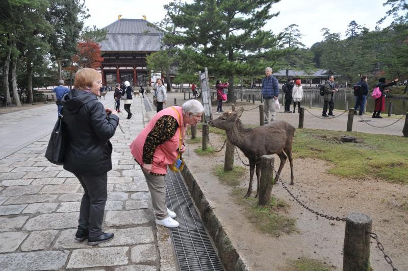 В град Нара живеят елени, пратеници на боговете