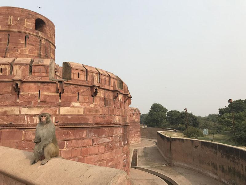 Фотопътепис Индия – страната на цветовете и древните култури 9