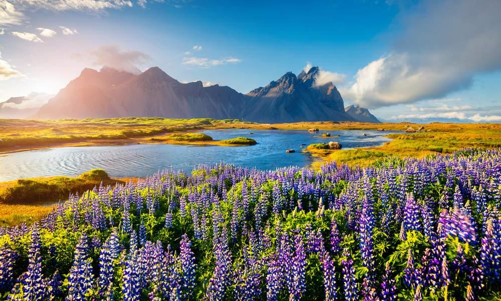 5-те най-очарователни животни на Исландия 1