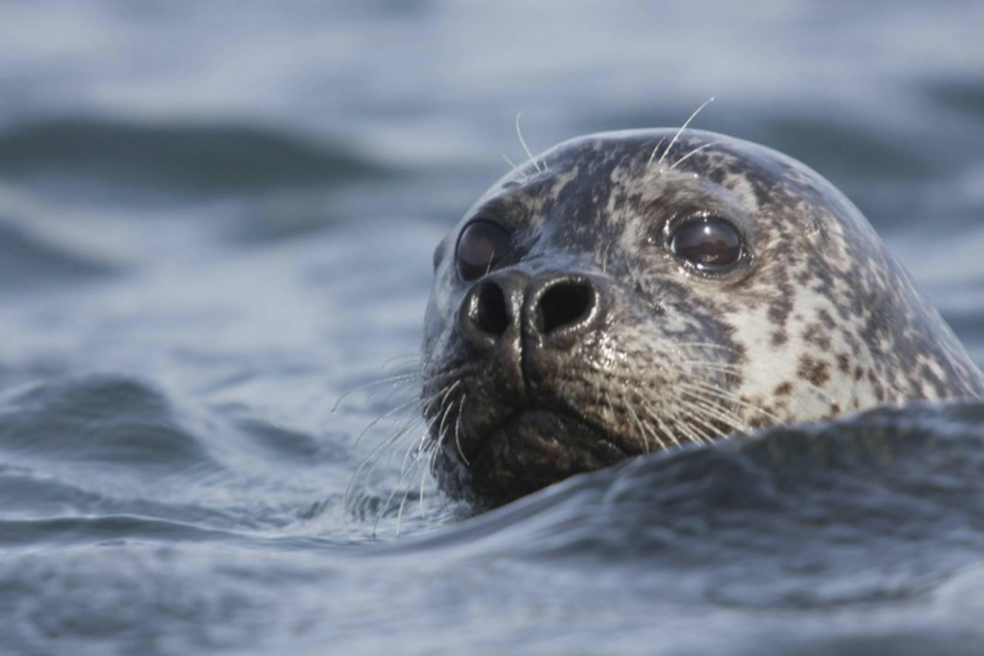 5-те най-очарователни животни на Исландия 7