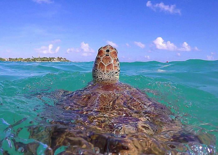 Акумал  - мястото на зелените костенурки - 2