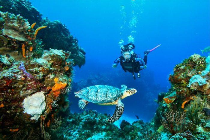 Акумал  - мястото на зелените костенурки - 4