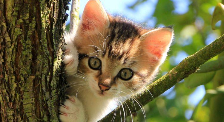 Подземията на Ермитажа – царството на котките