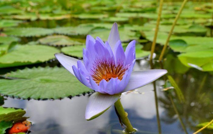 Ботаническата градина на Мавриций – сбъдната мечта - 6