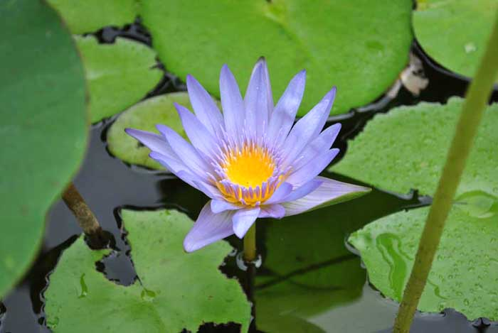 Ботаническата градина на Мавриций – сбъдната мечта - 4