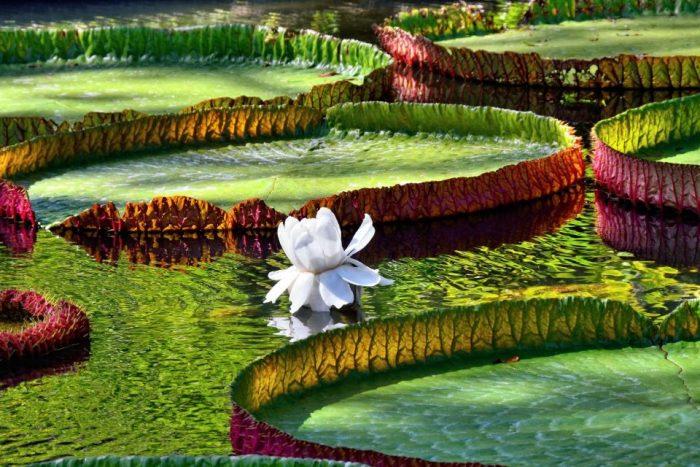 Ботаническата градина на Мавриций – сбъдната мечта - 5