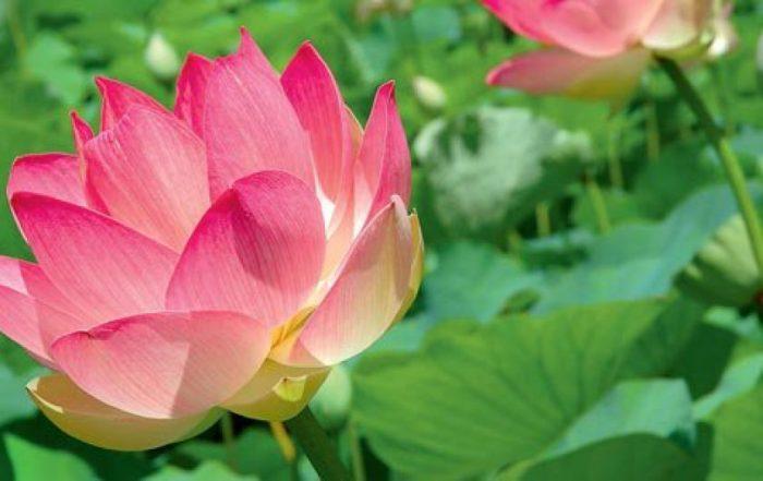 Ботаническата градина на Мавриций – сбъдната мечта - 7