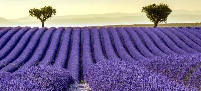 Прованс – ароматното лилаво море - 3