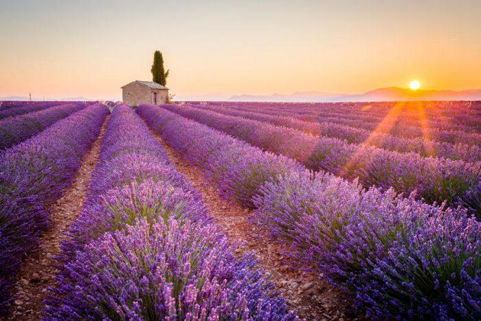 Прованс – ароматното лилаво море - 4