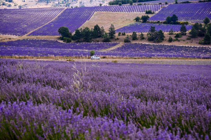 Прованс – ароматното лилаво море - 5