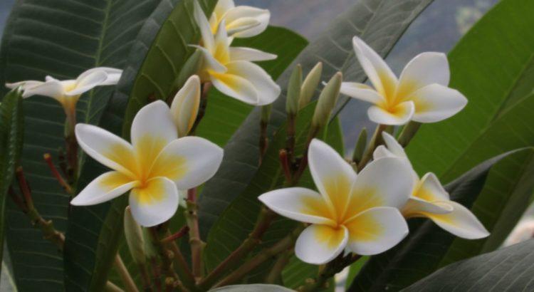 Ботаническата градина на Мавриций – сбъдната мечта
