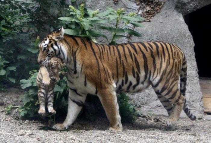Зоопаркът във Виена - най-старият в света - 2