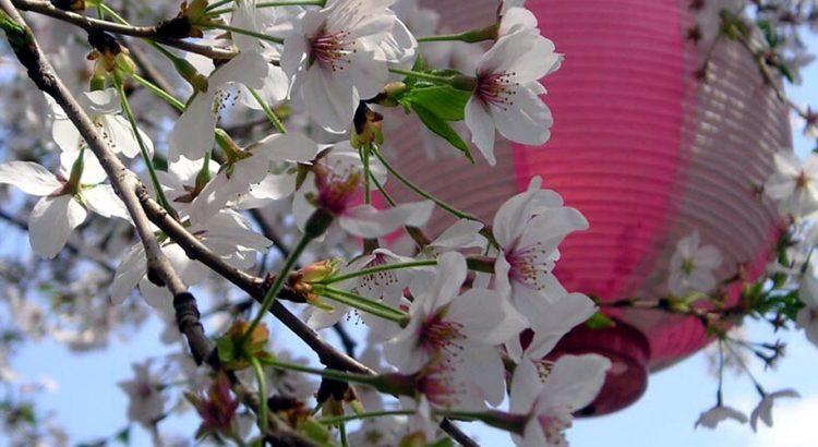 Сакура – вълшебният природен феномен в Япония