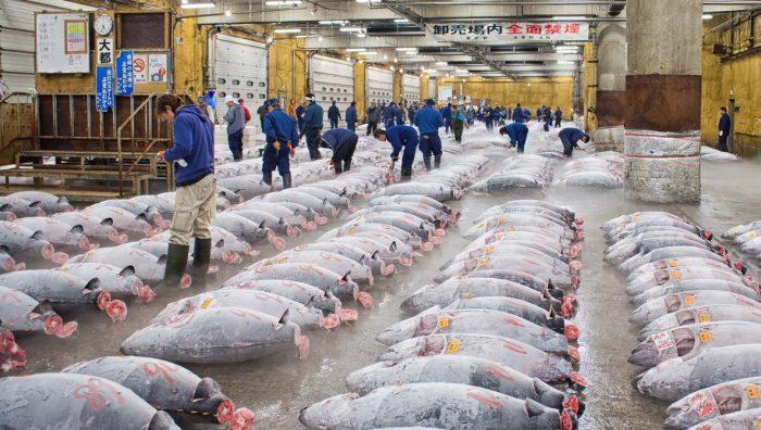 Пазарът за риба и морски деликатеси в Токио скъпото удоволствие - 1