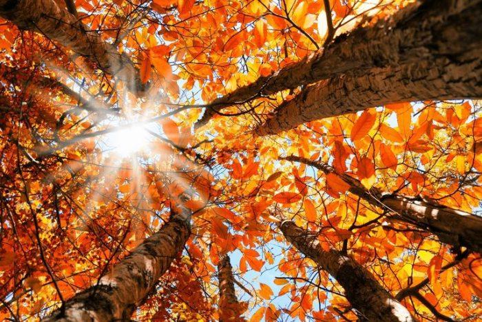 Есенните пейзажи – успокояващи и вдъхновяващи 1