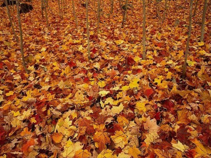 Есента и  къде да пътуваме - 3