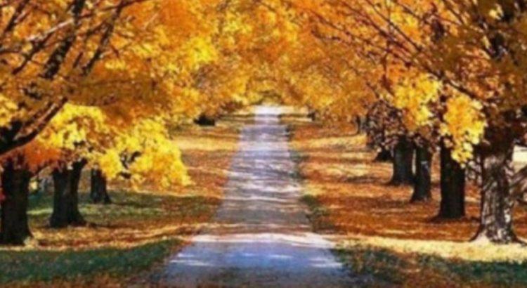 Есенните фестове – истински пир през октомври и ноември