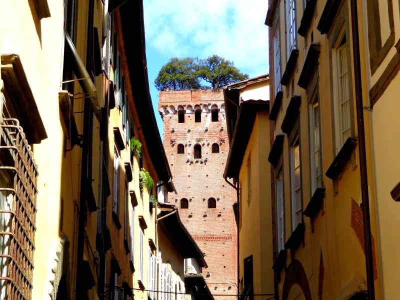 Коледните елхи на Тоскана 10