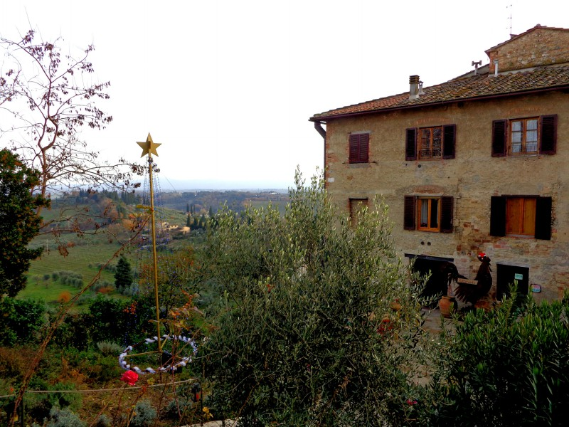 Коледните елхи на Тоскана 11
