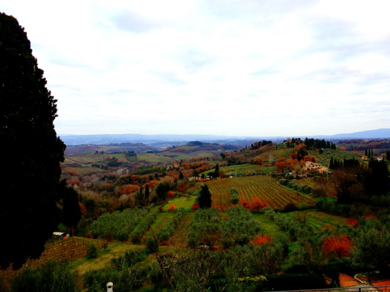 Коледните елхи на Тоскана 12