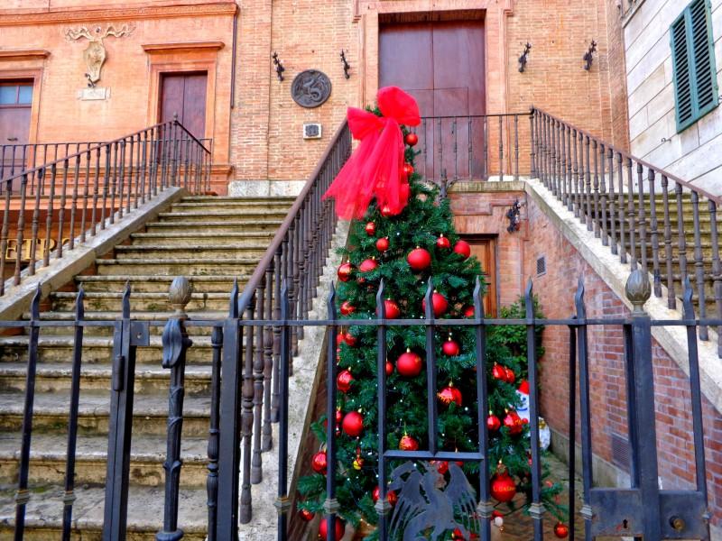 Коледните елхи на Тоскана 4