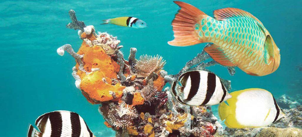 Юкатан – тропическият рай на маите 5