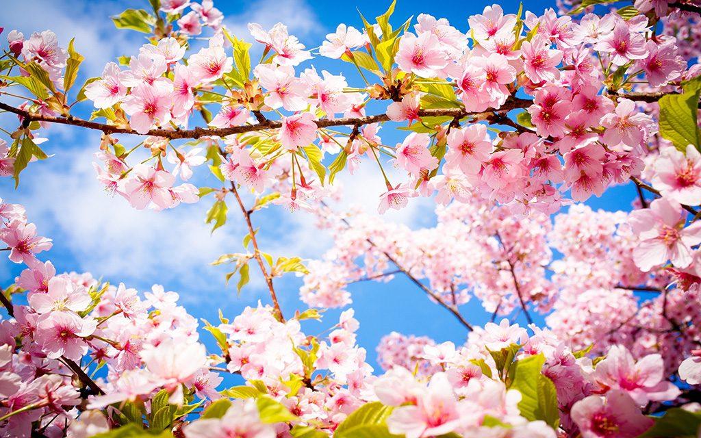 Пролетни празници 2019 1