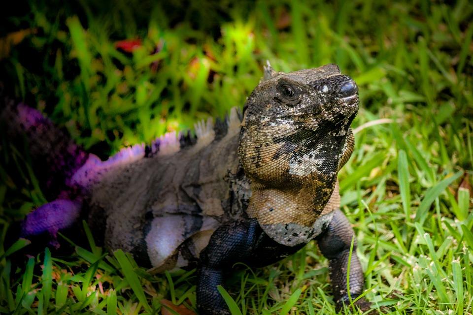 Юкатан – тропическият рай на маите 3