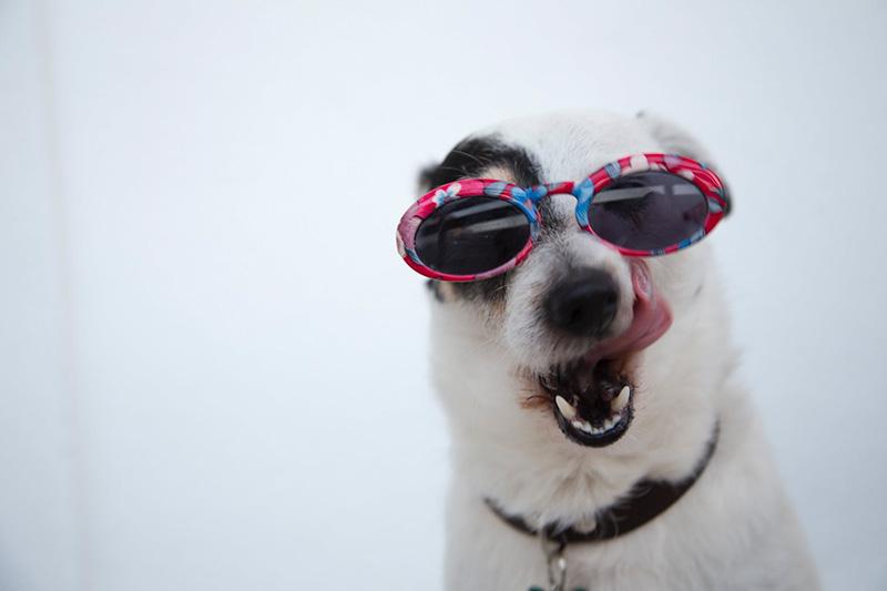 Модните тенденции за слънчеви очила на лято 2019 20